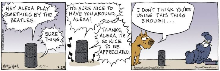 beatles alexa Dogs of C-Kennel