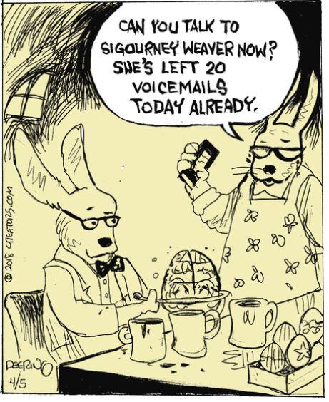 strange rabbit.JPG