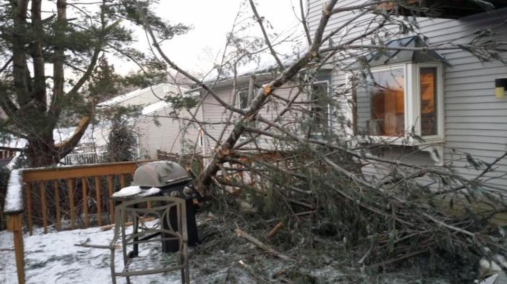 tree-deck2