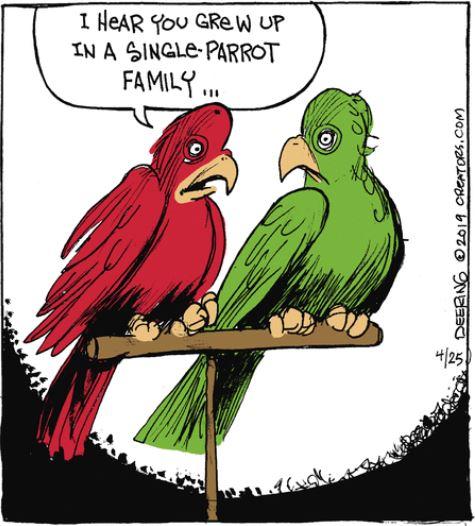 strange parrot