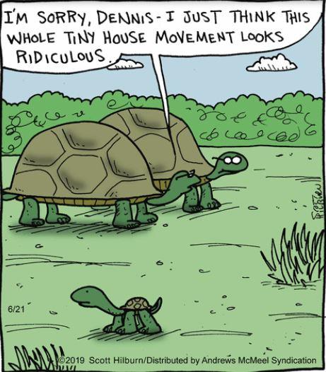turtles-argyle